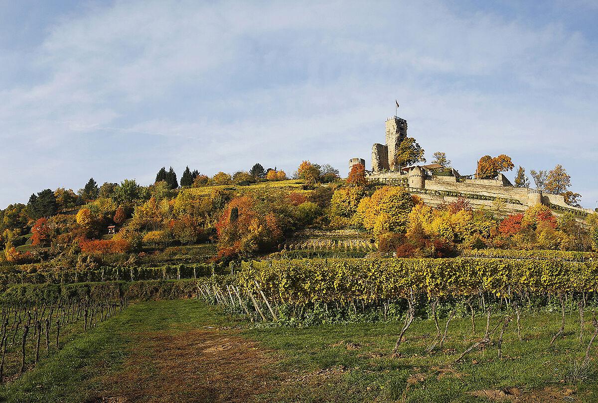 Blick auf die Burgruine Wachtenburg